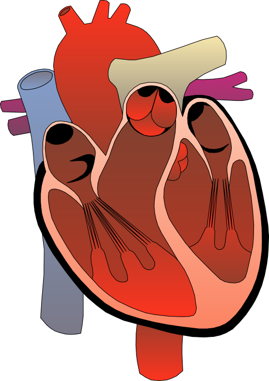 Animated human heart . Worm clipart realistic