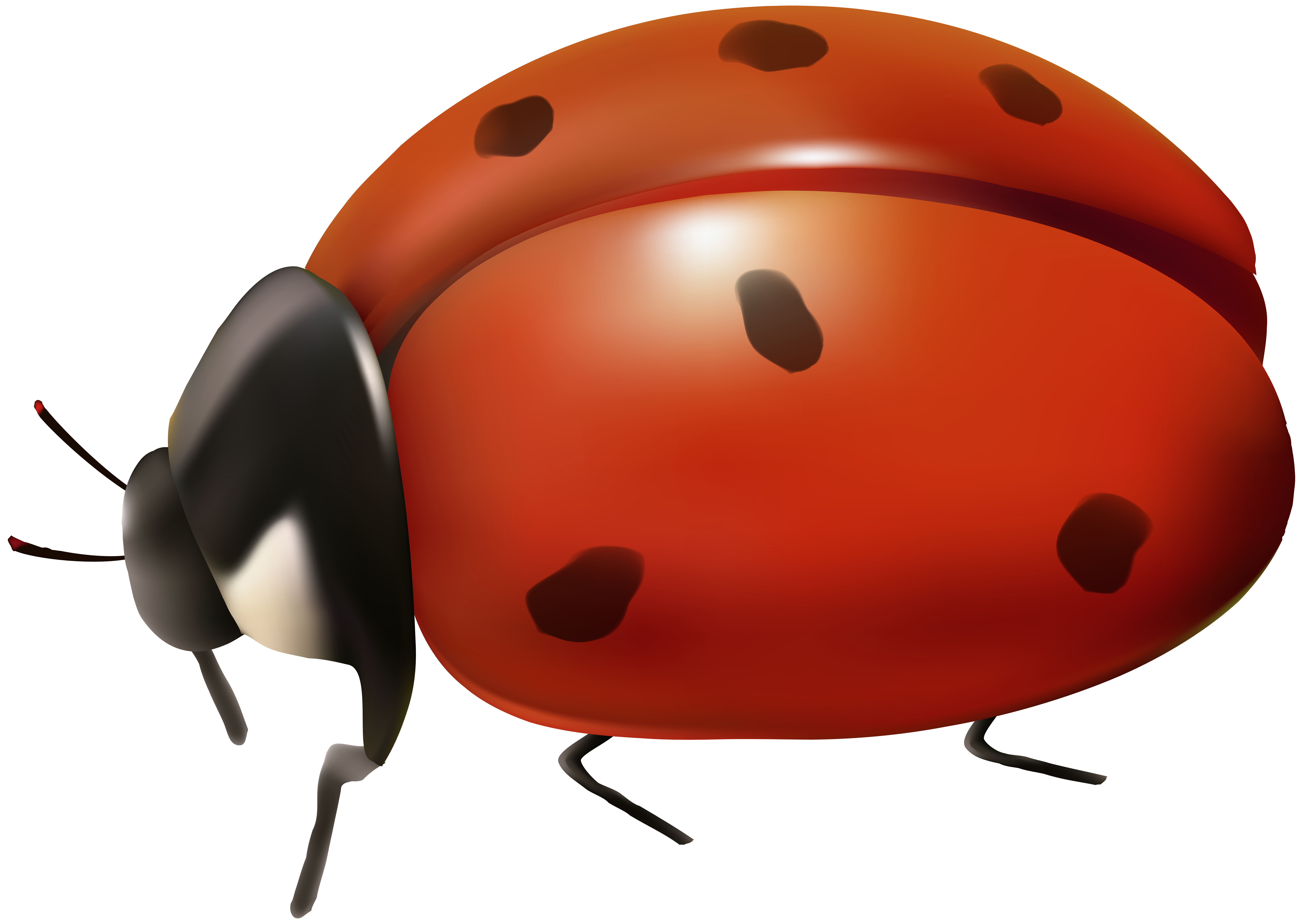 Ladybug transparent gallery yopriceville. Ladybugs clipart leaf clip art