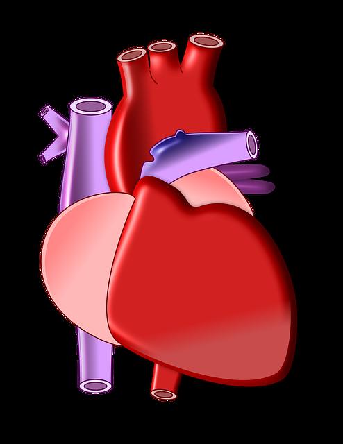 Disease clipart cardiac. Organs biological science pencil