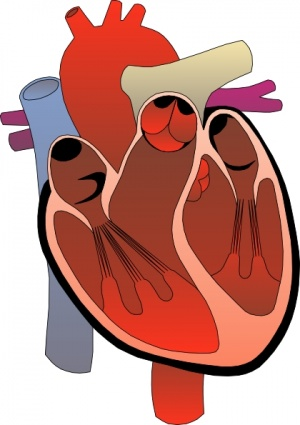 Hearts clipart science. Free heart cliparts download