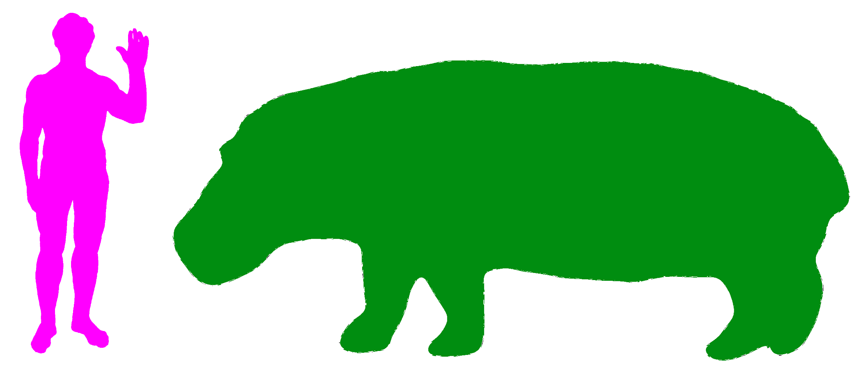 Hippopotamus clipart hippo head. Big animals the is