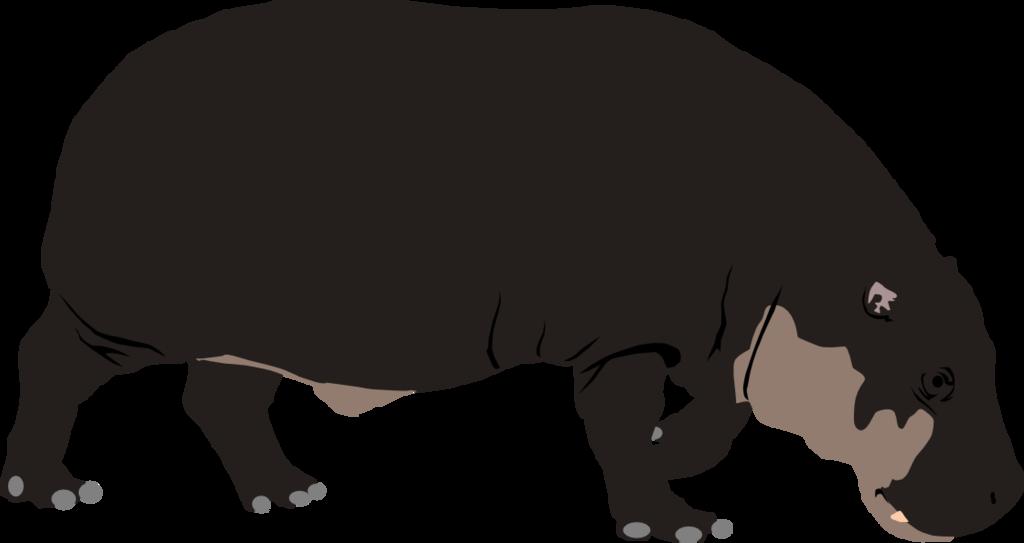 Hippo pygmy hippo