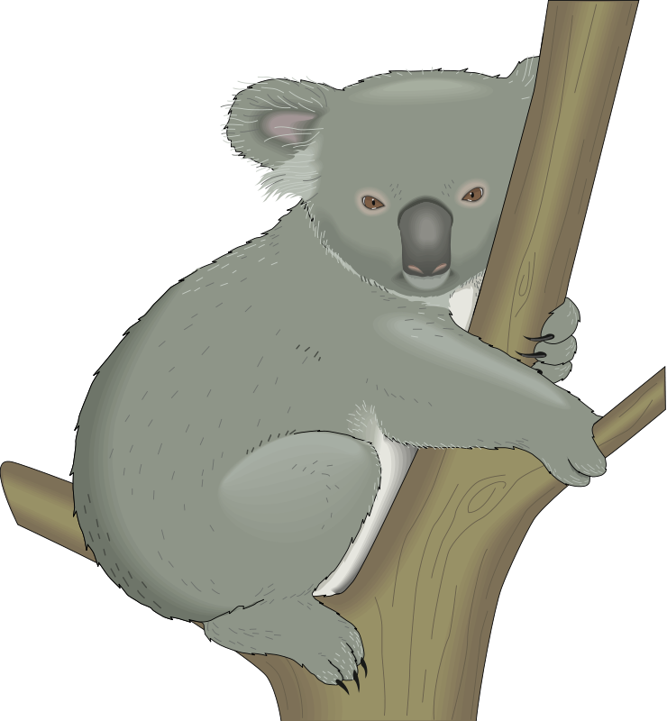 Koala animal pictures royalty. Hamster clipart realistic
