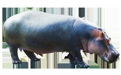 Hippo clipart realistic cartoon.
