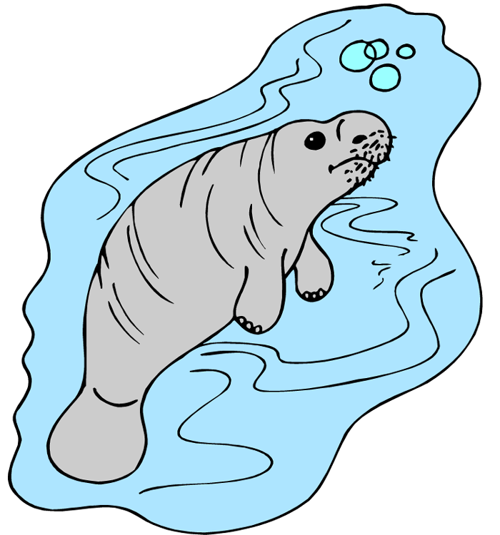 Manatee clipart baby manatee. Free under water