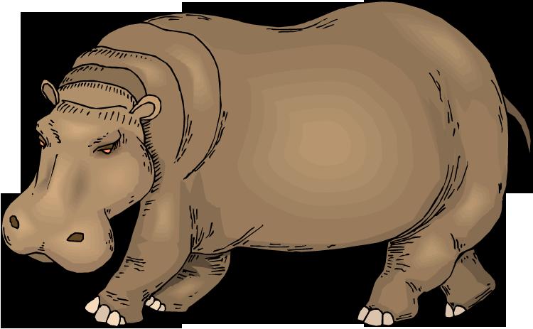 Free. Hippo clipart wild animal