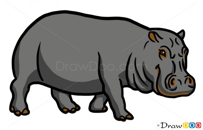 How to draw hippopotamus. Hippo clipart wild animal