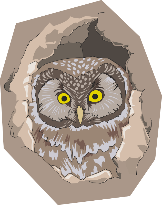 collection of in. Nest clipart owl nest