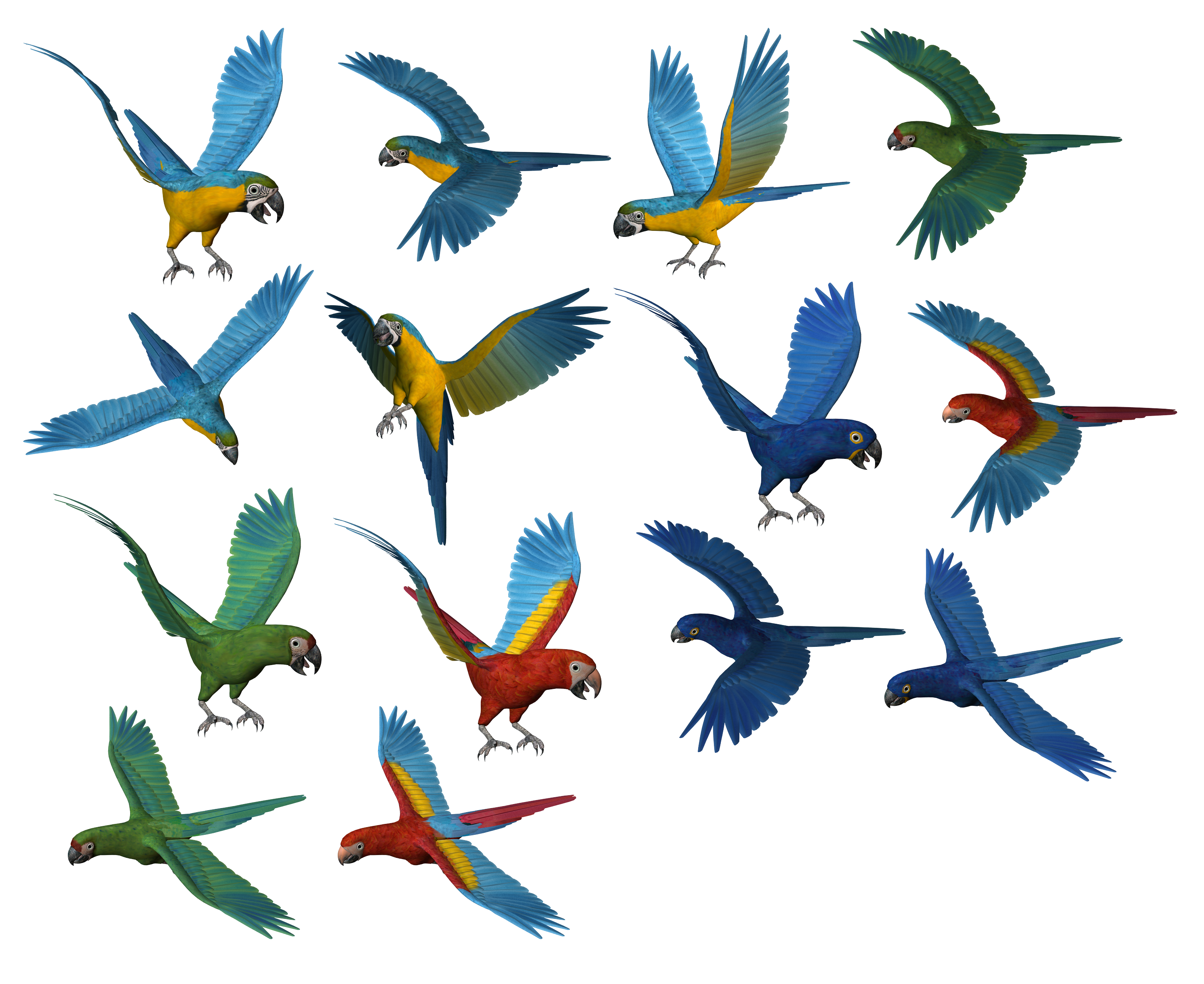 Set of parrots isolated. Png images download
