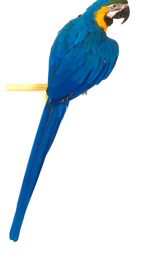 Ten isolated stock photo. Parrot clipart colour