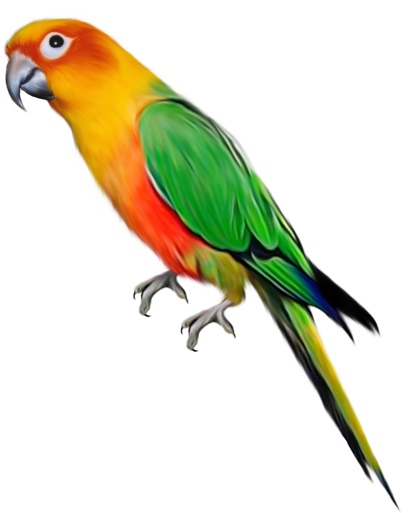 Parrot clipart green indian. Large gallery yopriceville high