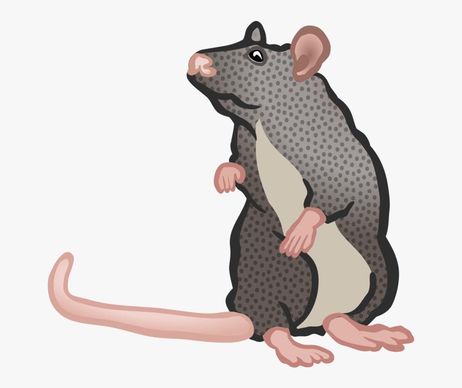 Rat pest control house. Clipart mouse rodent