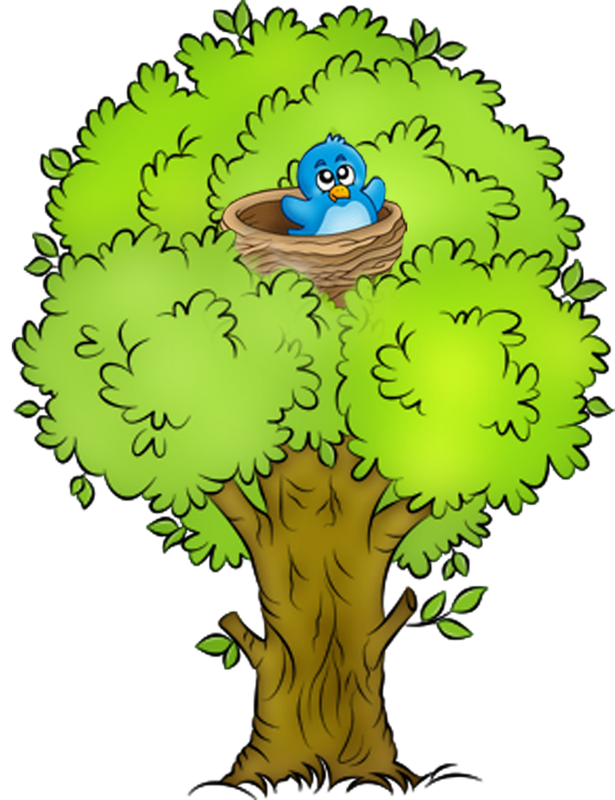 Woodland clipart fine tree. Spring png pinterest clip