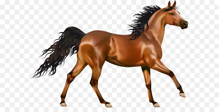 Clip art equestrian cliparts. Clipart horse arabian horse