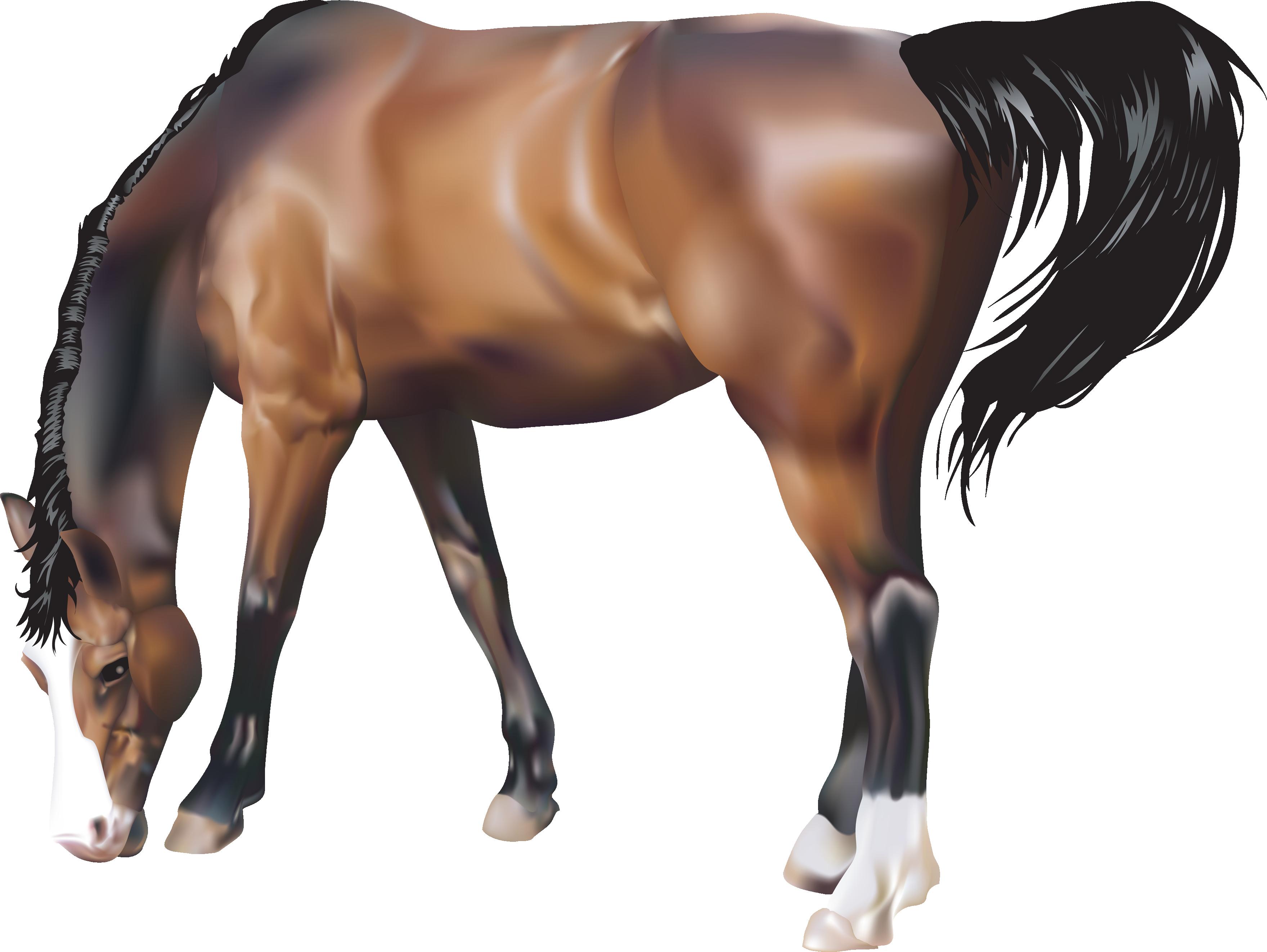 Horse twenty six isolated. Free png images transparent backgrounds