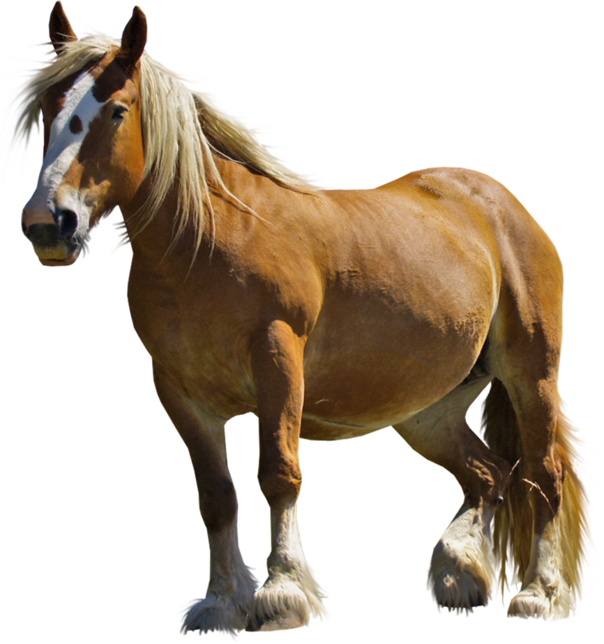 Horse clipart domestic animal. Png stock by gilgamesh