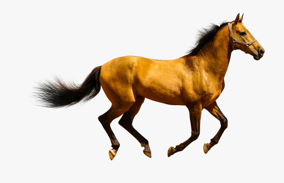 Horses clipart domestic animal. Horse is or wild