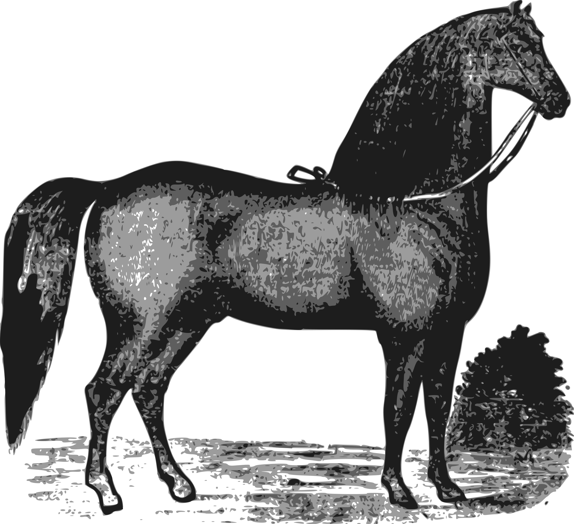 Clipart horse elegant. Icons png free and