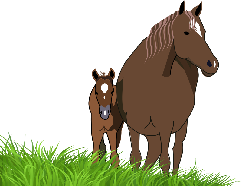 collection of mare. Clipart horse foal
