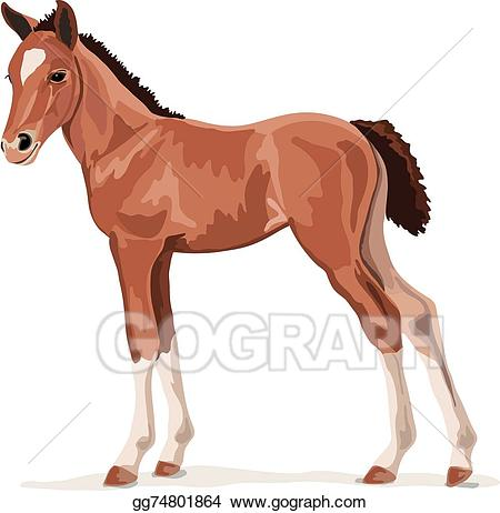 Vector illustration brown pony. Clipart horse foal