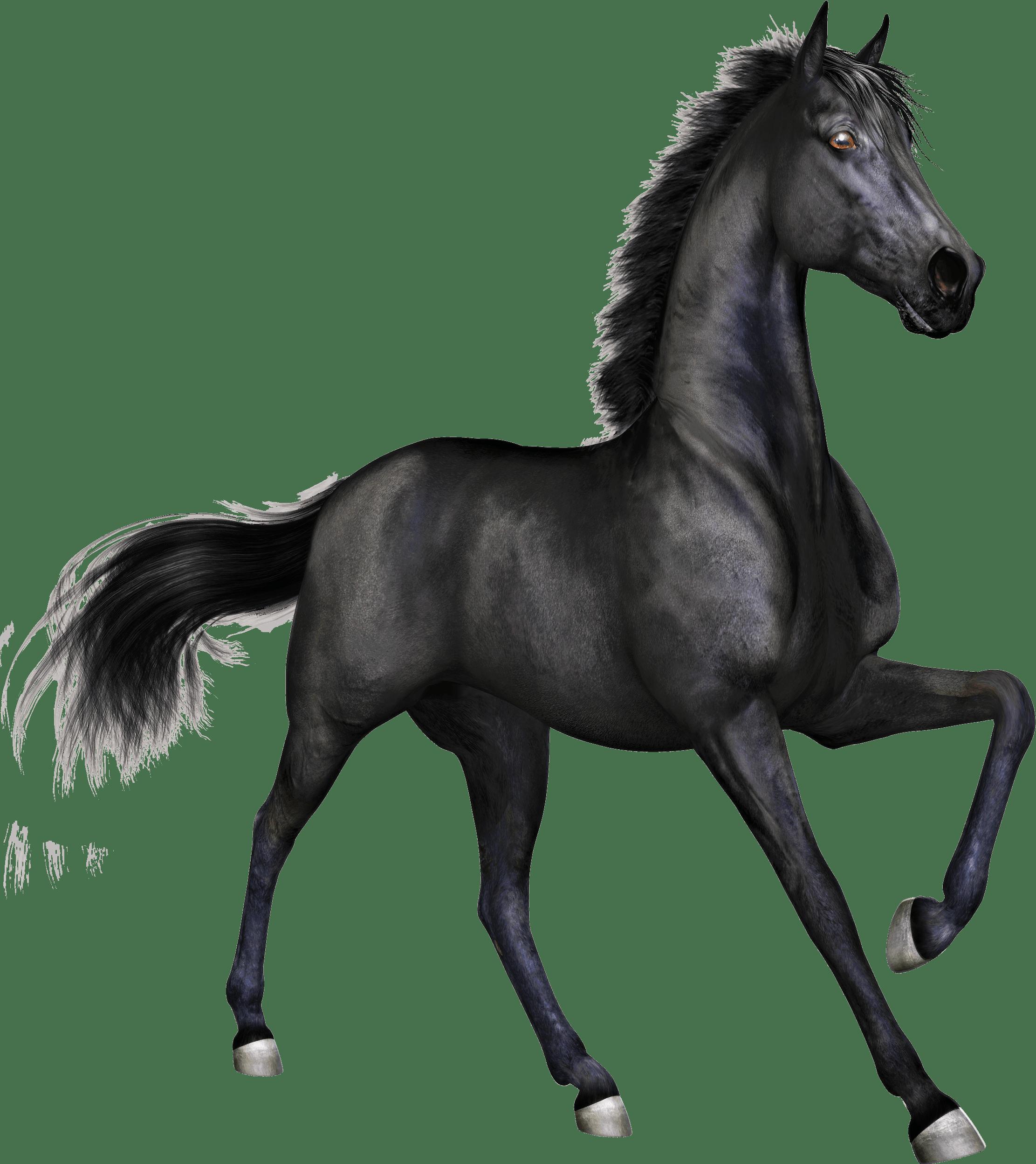 Horses transparent png images. Race clipart animal race