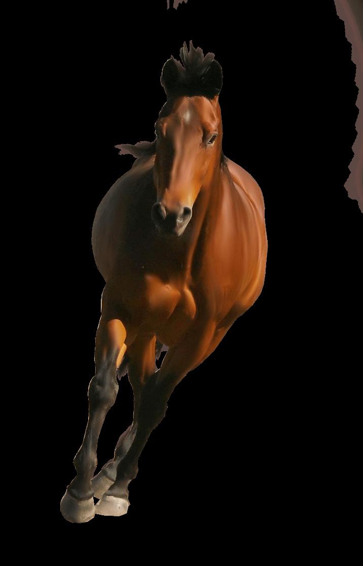 Transparent png stickpng. Horse clipart front
