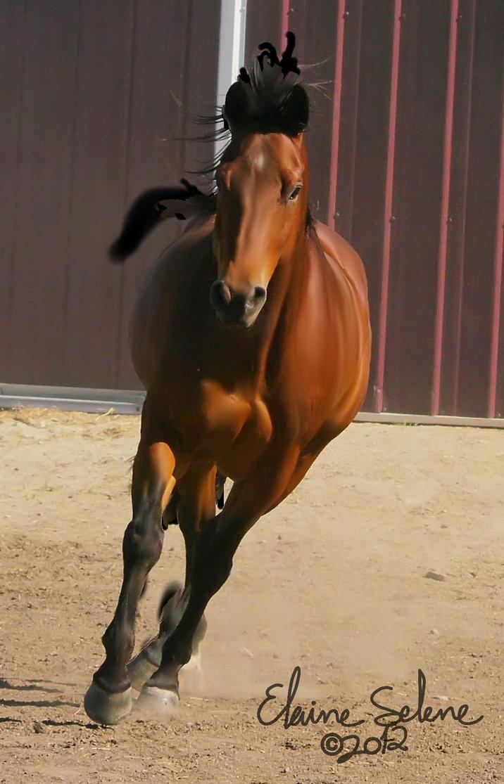 Twenty eight isolated stock. Horse clipart file