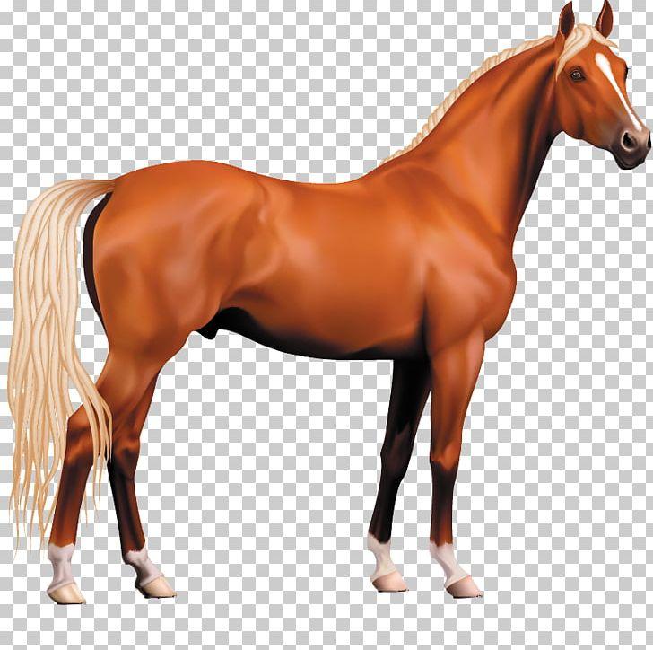Pony stallion png d. Clipart horse morgan horse