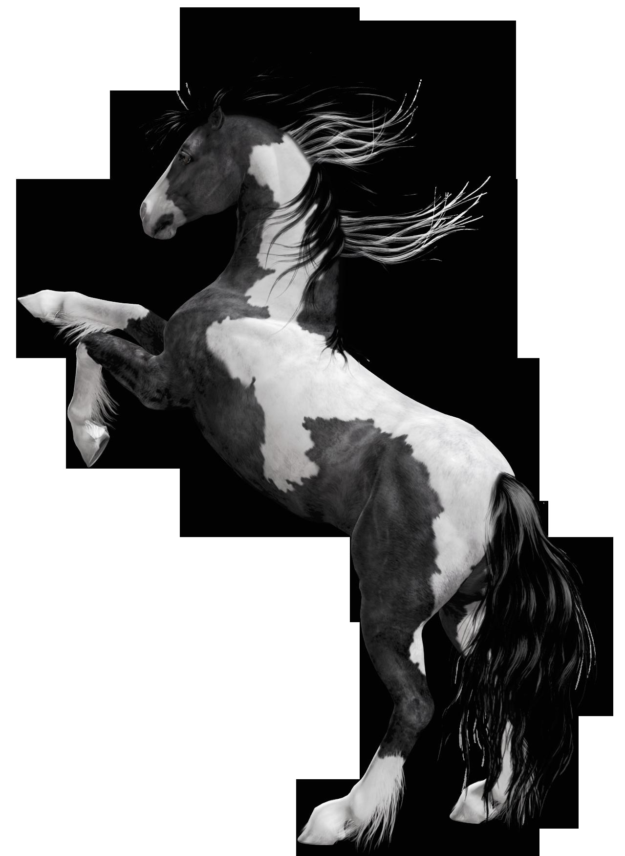 Black white horse png. Trail clipart vivid