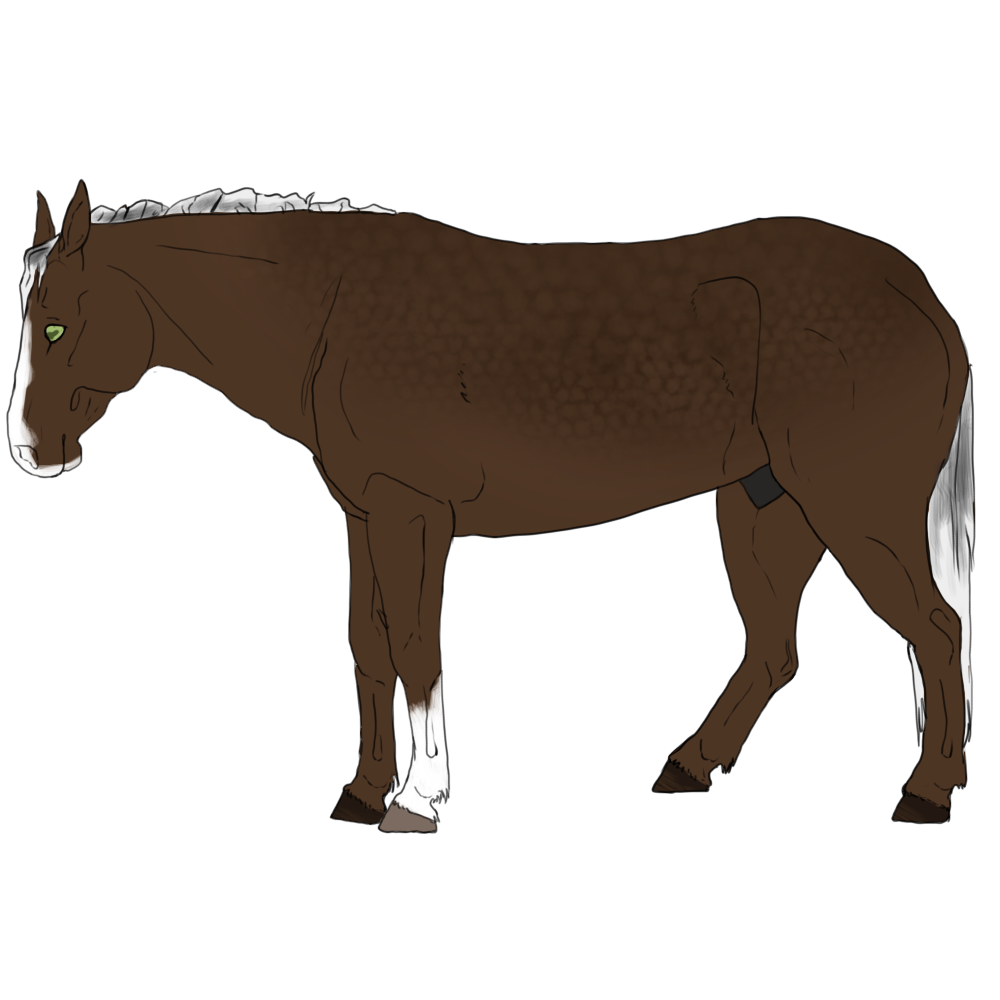 Clipart horse pole bending. View topic the bold