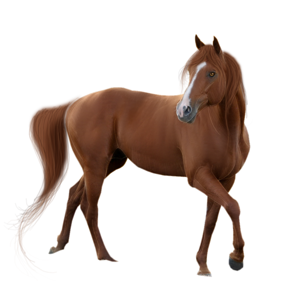 American mustang clip art. Clipart horse quarter horse