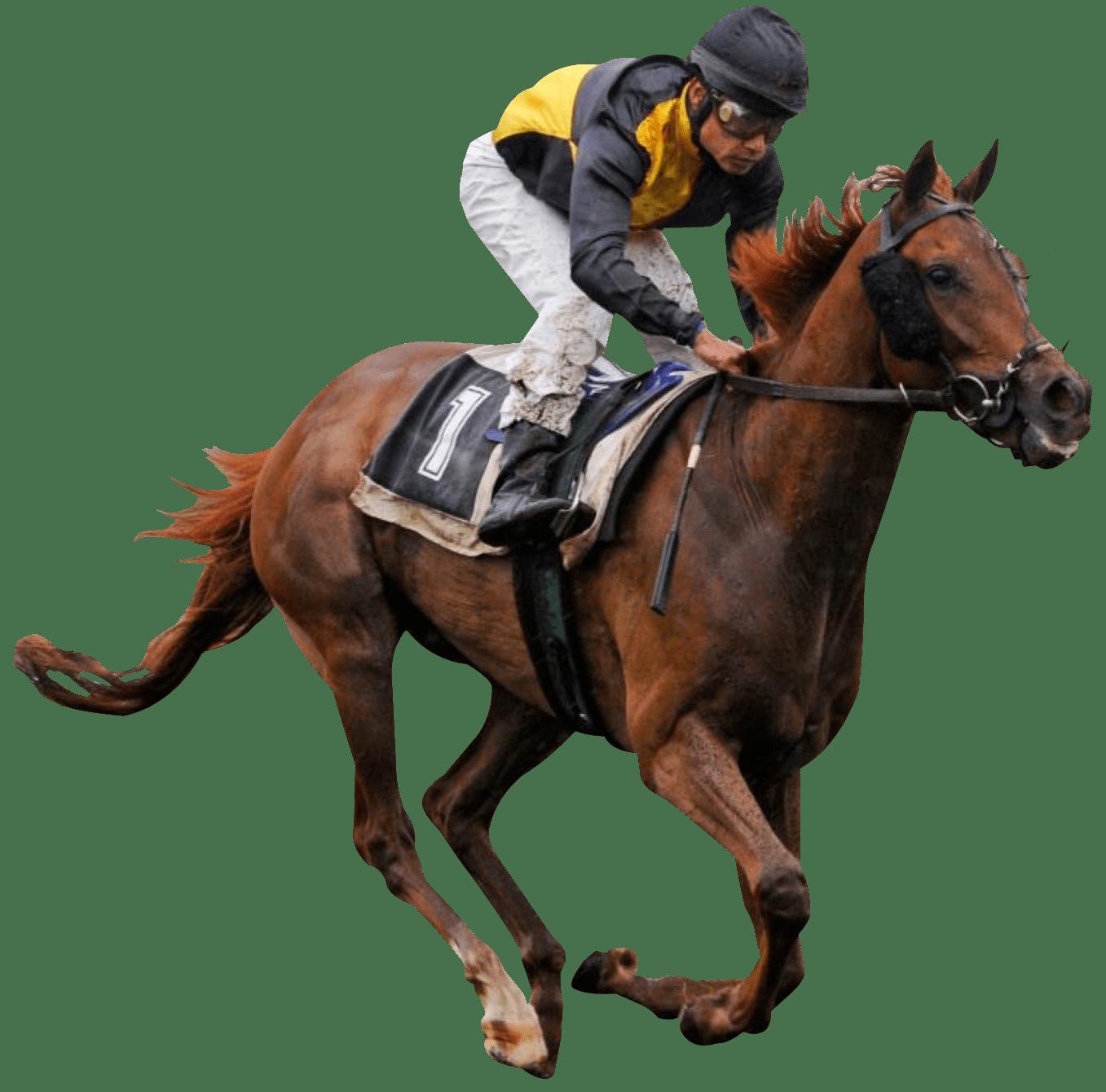 Horses transparent png images. Race clipart racecourse