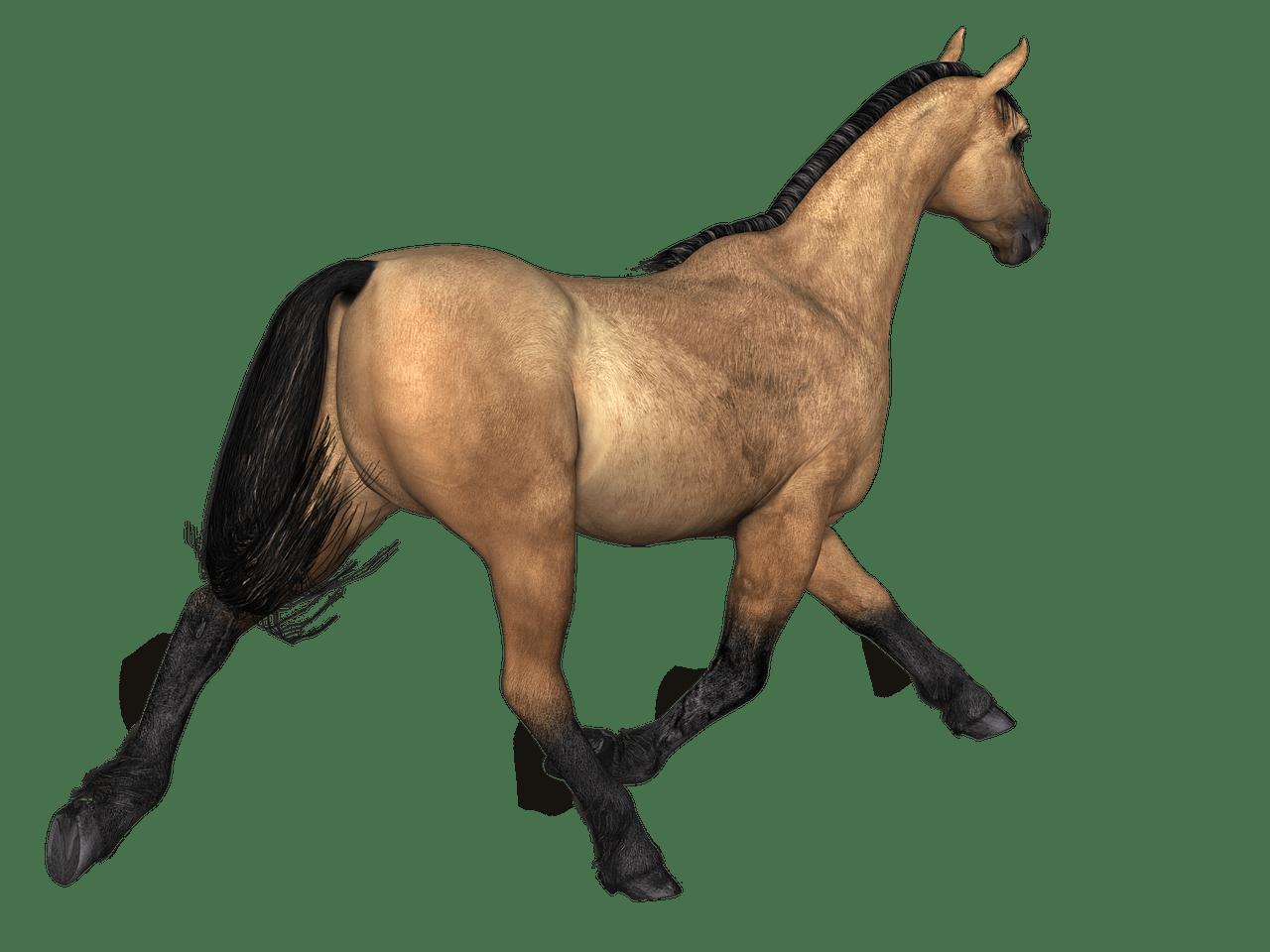 Clipart horse rear. Horses brown view transparent