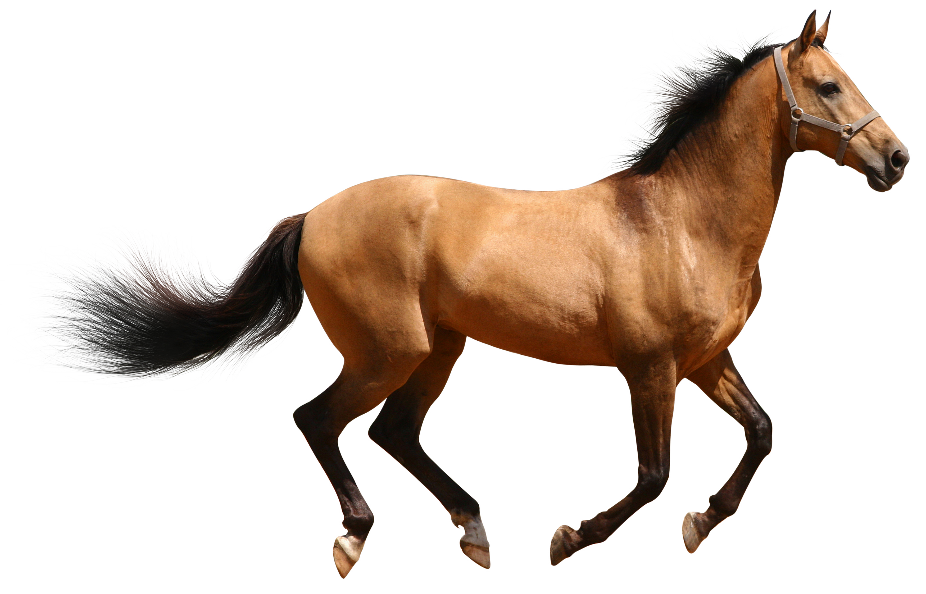 Donkey clipart tiny horse. Facts history useful information