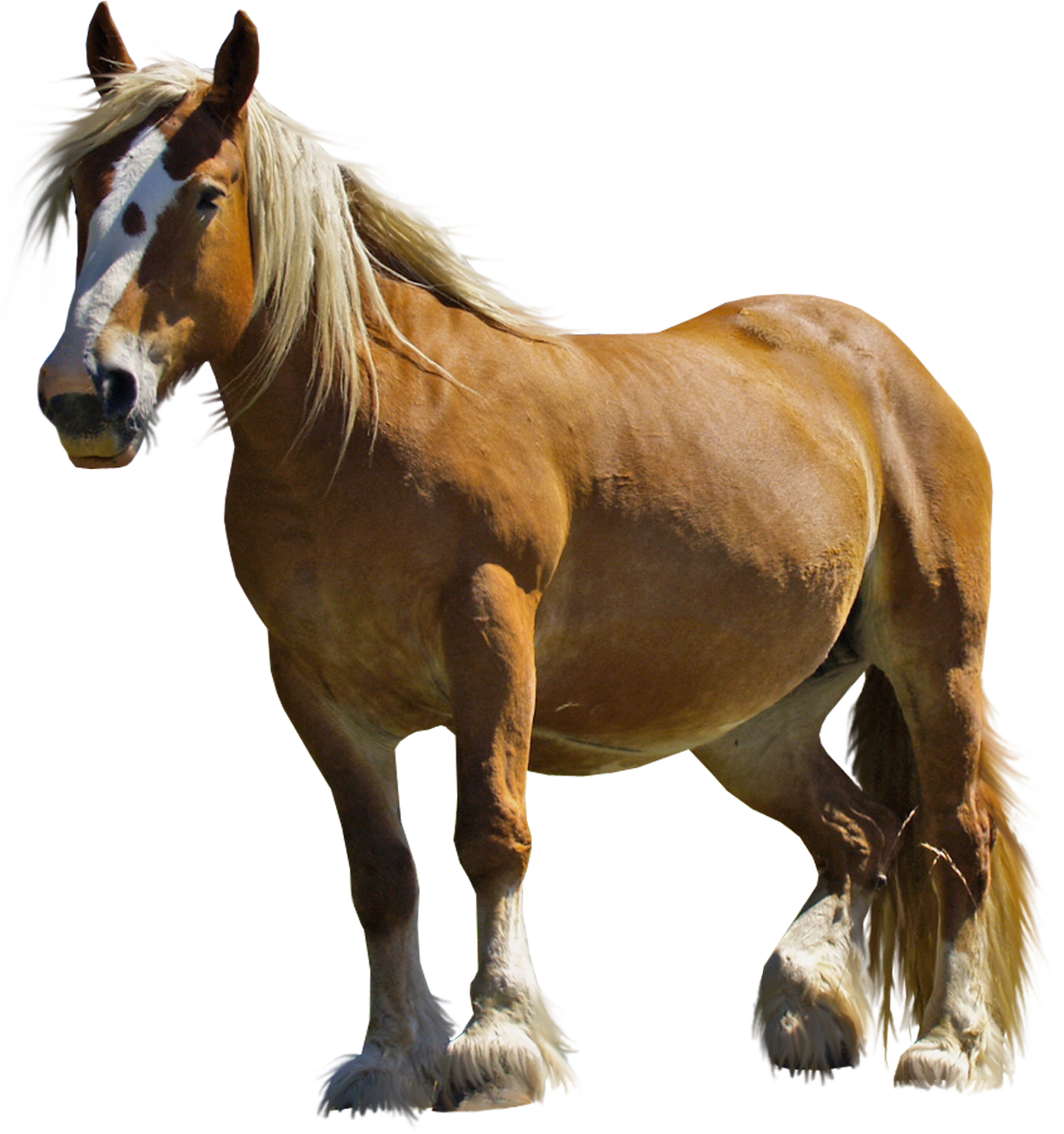 Clipart horse standing. Png images free download