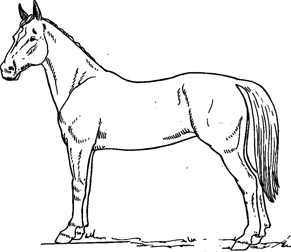Cartoon black and white. Clipart horse vector