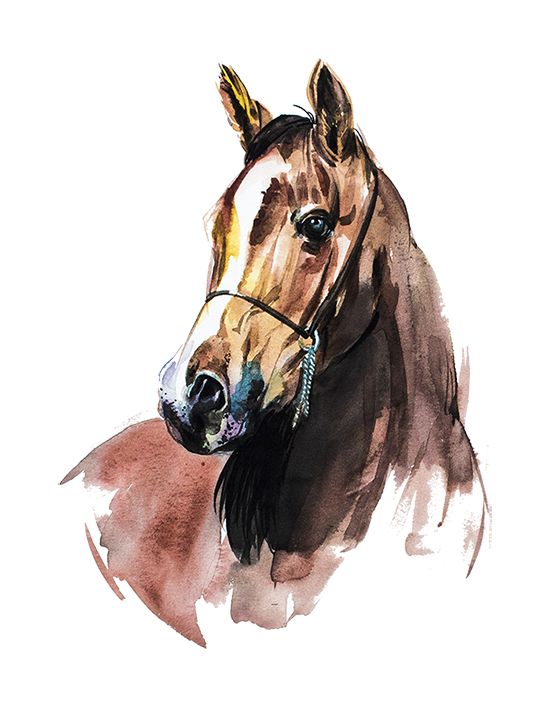 Pin by pngsector on. Clipart horse watercolor