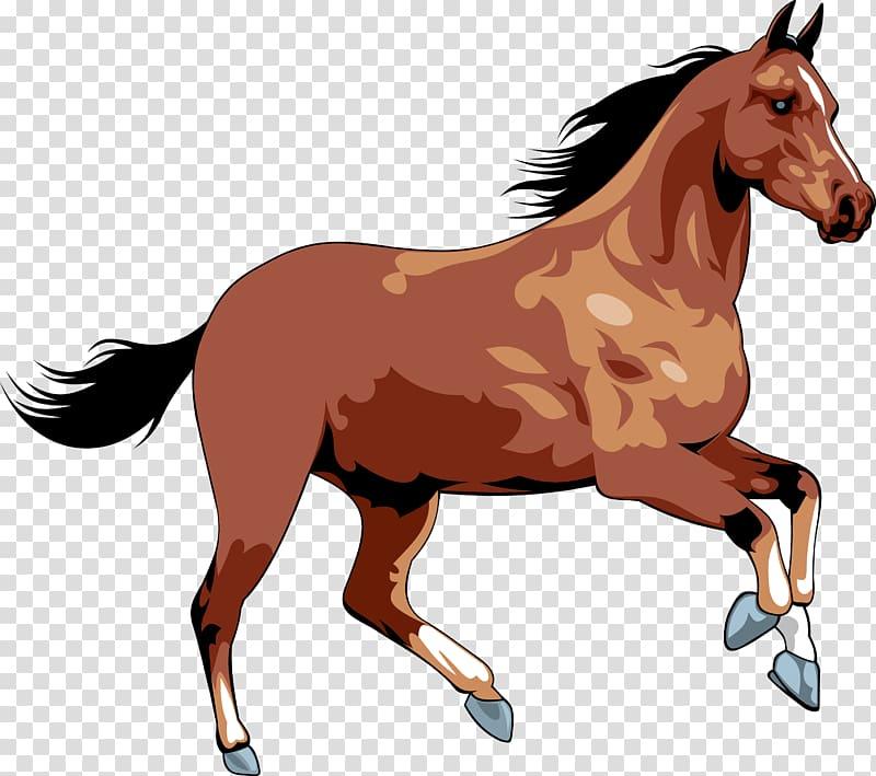 Transparent background png pngguru. Clipart horse wild horse
