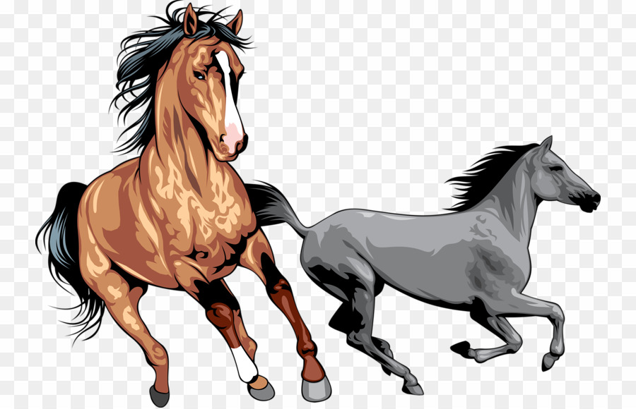Clipart horse wild horse. Horses png mustang download