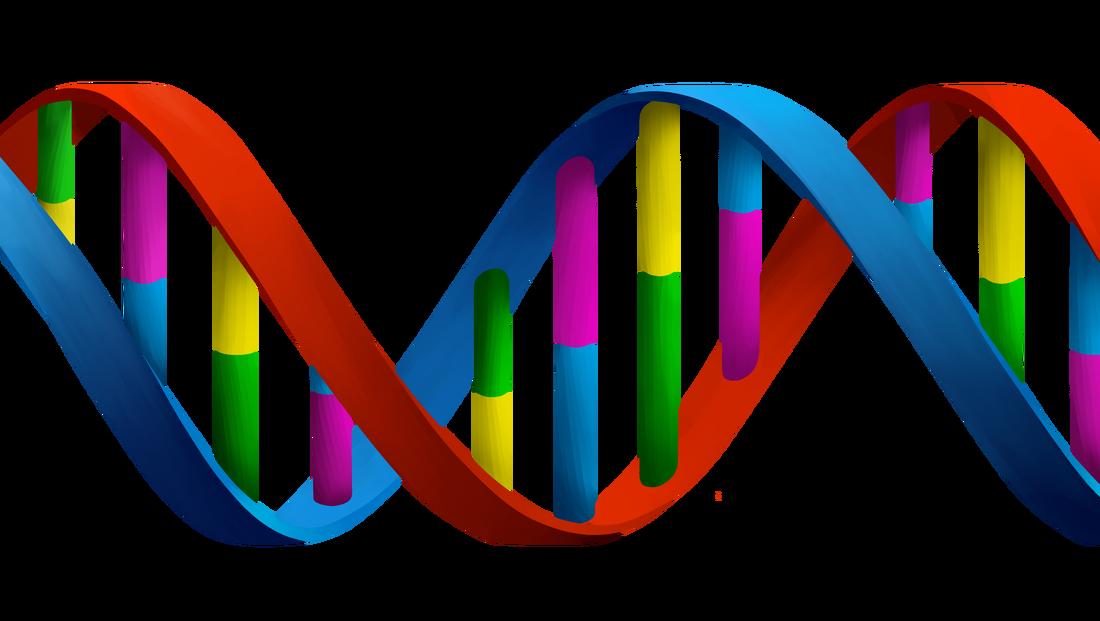dna clipart genetic trait