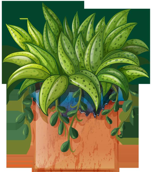 Clip art of beautiful. Plants clipart house plant