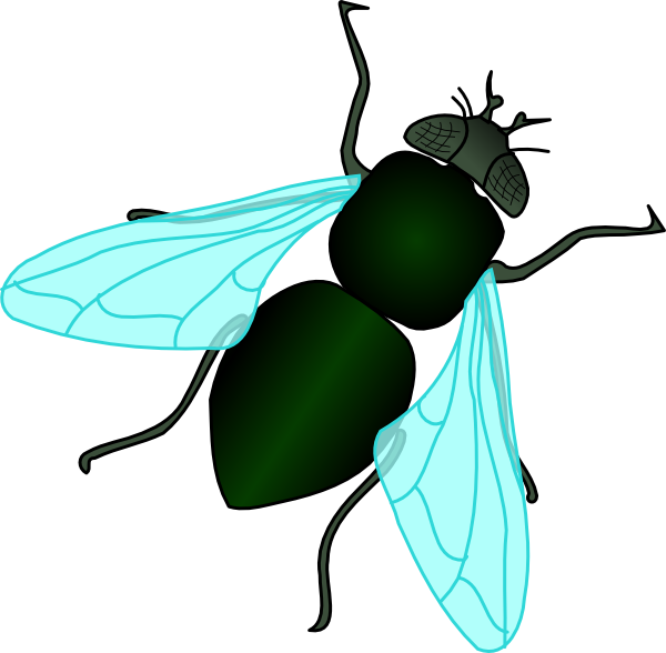 Fly clipart beetle. House pencil and in