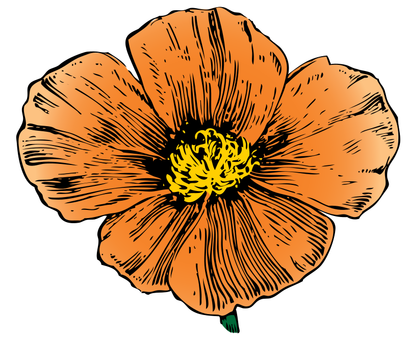 Free thanksgiving artwork download. Poppy clipart flanders field