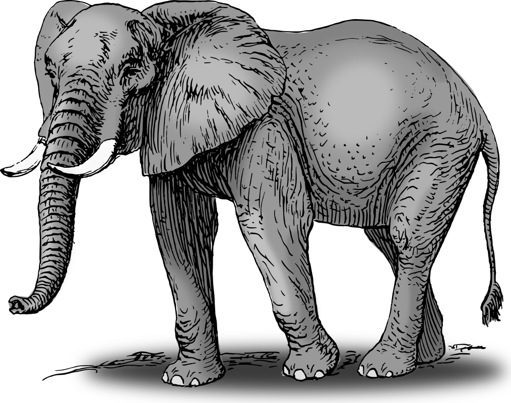 Colored medium image png. Picture clipart elephant