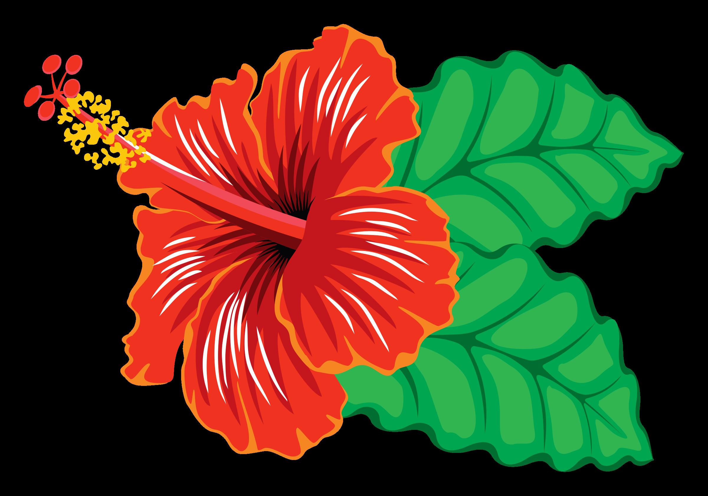 collection of hibiscus. Plants clipart gumamela