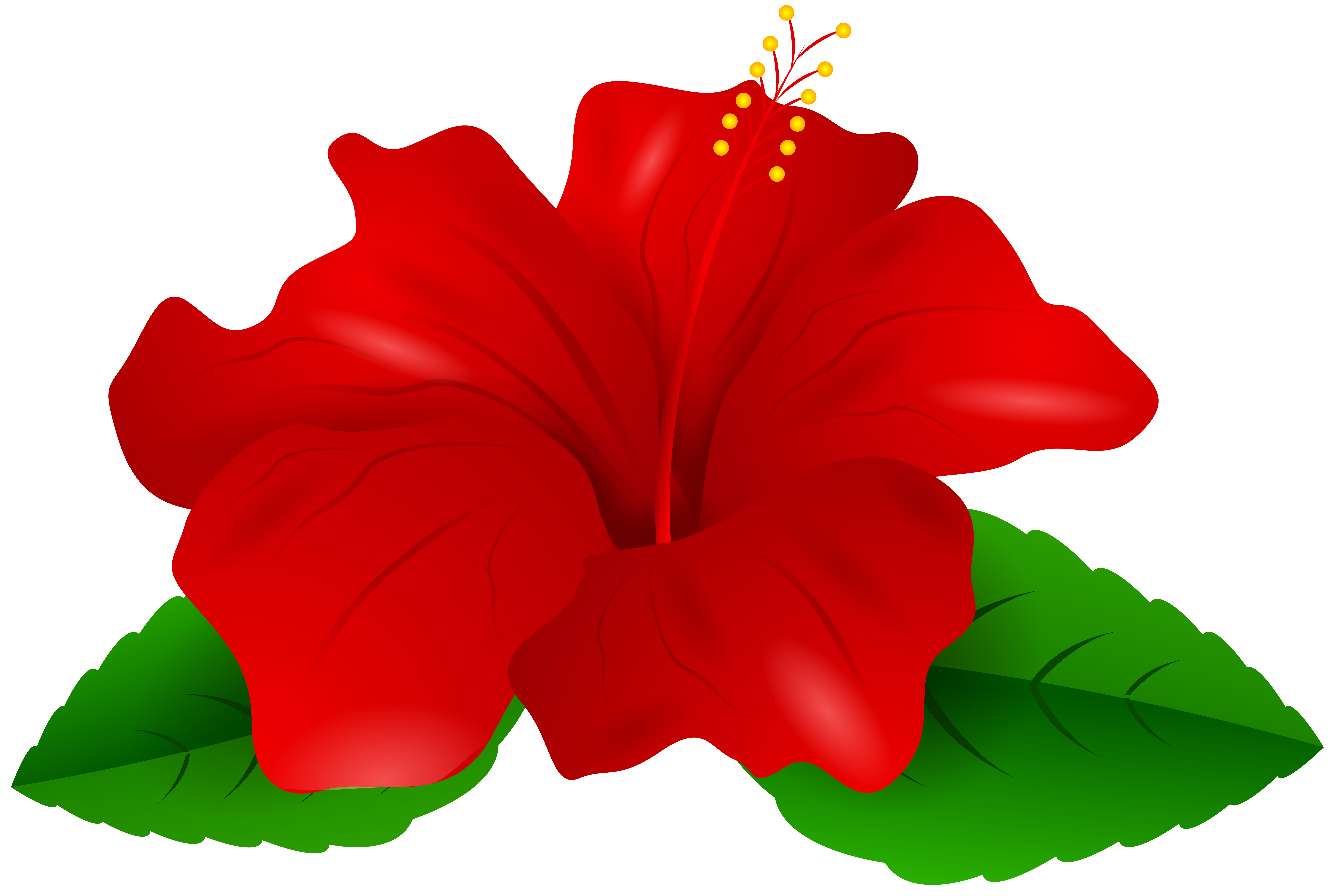 Hibiscus flower png. Red transparent clip art