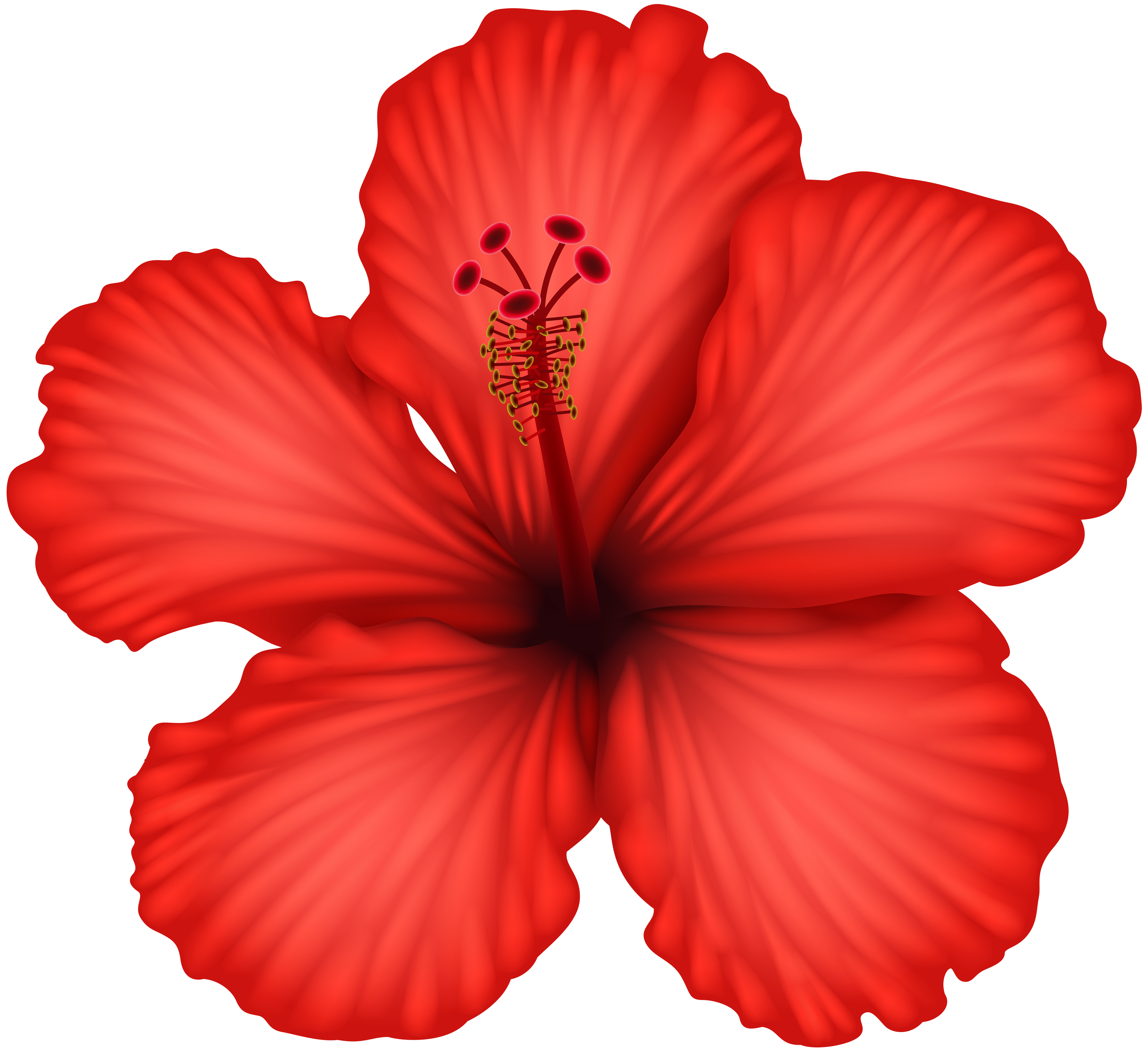 Hibiscus flower png. Red clip art gallery
