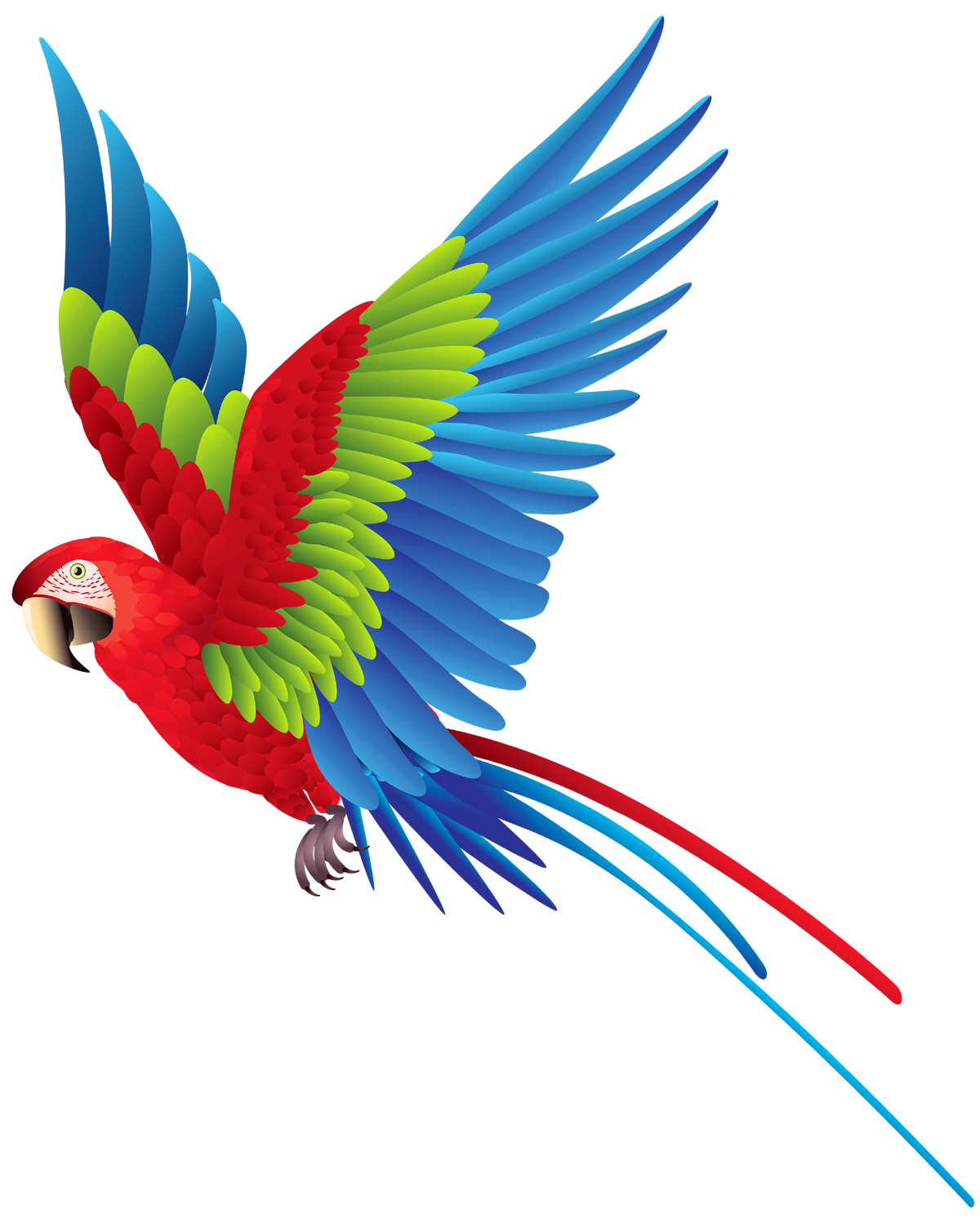Hd quality flying png. Parrot clipart bird fly