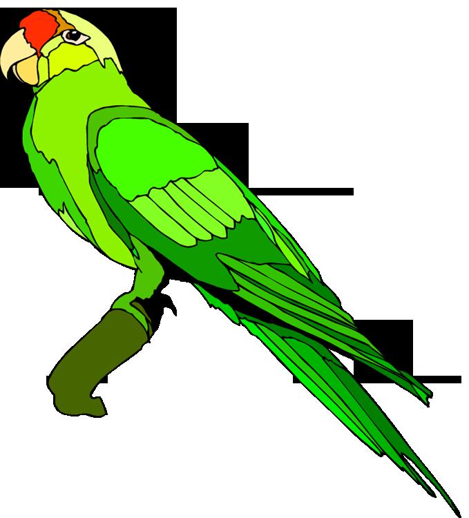 The top best blogs. Parrot clipart rainforest parrot