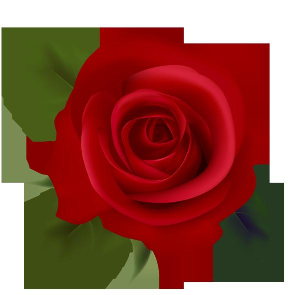 Red roses clip art. Clipart rose kid